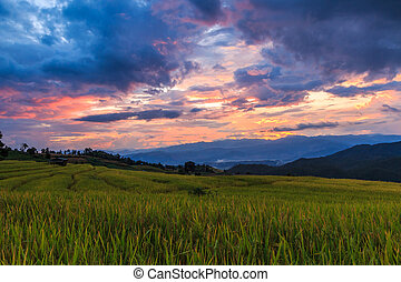 Paddy Field in Mae Jam Village , Chaing mai Province ,...