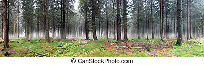 Misty Forest - Panoramic image of misty forest. Horizontally...