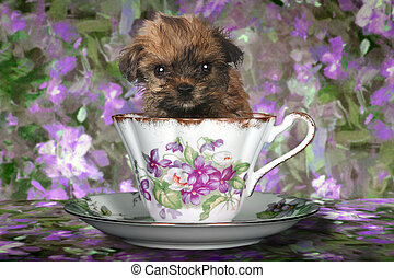 Yorkshire Terrier Puppy in a Teacup