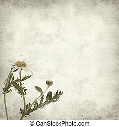 textured old paper background with canarian marguerite daisy...