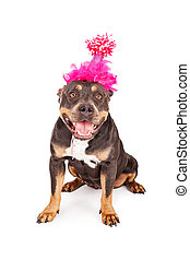 Happy Birthday Dog In Party Hat - A cute and happy tri-color...