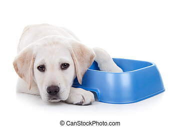 Hungry Dog - Hungry dog with food bowl. Hunger and...