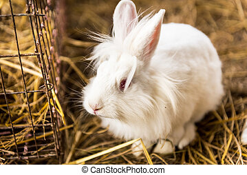 Rabbit on a hay stack.