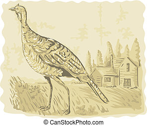 illustration of a Wild turkey with house in the background...