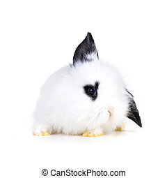 small white rabbit close up