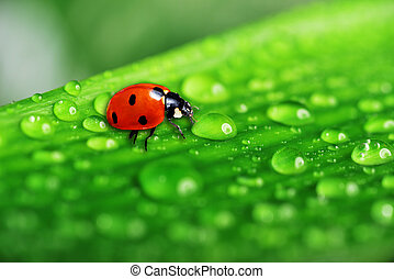 lady bug on fresh grass - lady bug