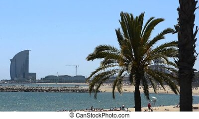 palm tree on the beach of Barcelona
