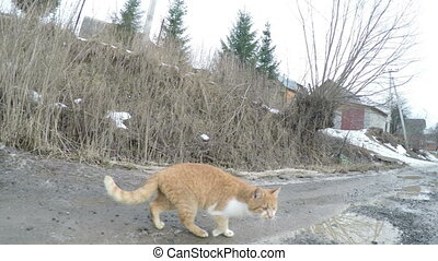 Cat washes - On winter road is red cat