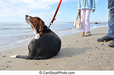 dog scratching on the beach - two humans waiting their puppy...
