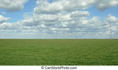 Agriculture, wheat field in spring - Wheat field in spring...