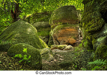 Nelson Ledges State Park Ohio - Huge moss and lichen covered...