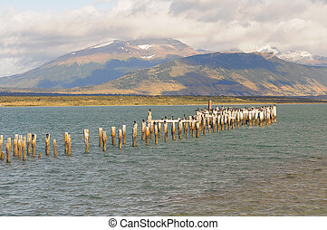 King Cormorant colony - King Cormorant colony, Old Dock,...