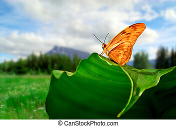 Julia Butterfly - Photo of a Julia Butterfly resting on a...