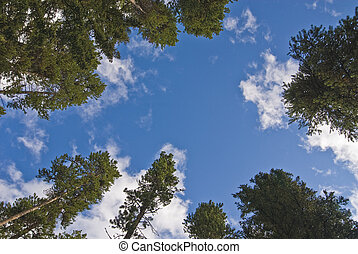 Reach for the sky - Conceptual image of trees reaching for...