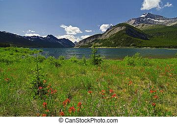 Canadian Rockies - Indian Paintbrush Wildflower's in bloom...