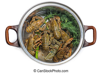 Fresh crayfish in a pot - Fresh crayfish in pan, a...