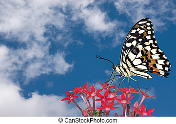 Butterfly and Clouds - Beautiiful colorful butterfly resting...
