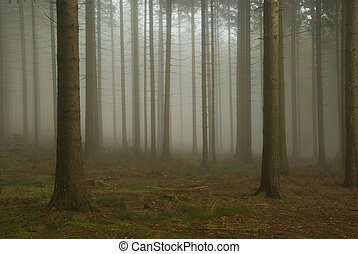 forest in fog 08
