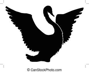 swan - silhouette of swan