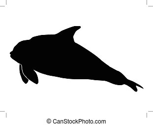 orca - silhouette of orca
