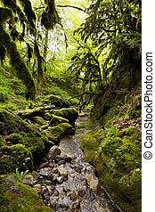 Boxwood forest - Boxwood forest. Mountain stream in the...