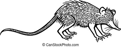Solenodon - vector line drawing a rare animal the solenodon