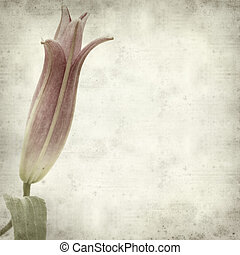 textured old paper background with lily bud