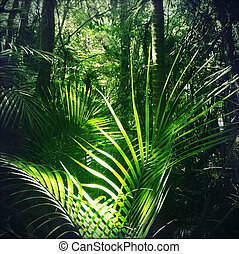 Jungle - Lush green foliage in tropical jungle