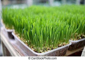 Seedlings. - Seedlings of species.