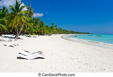 tropical beach -  palm trees on tropical beach