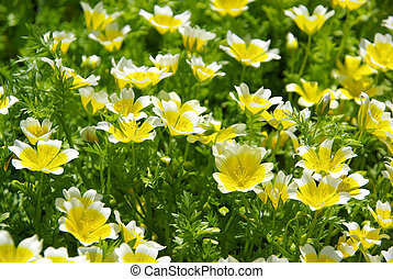 poached egg plant 08