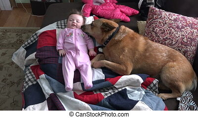 Dog Checking Out New Baby - Dog checking out the new...