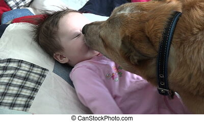 Closeup of Dog Kissing Baby - Dog kissing a baby other...