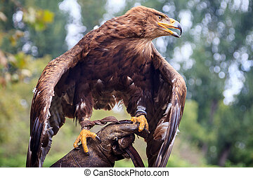 Fierceness - The fierceness of the Eagle placed on the glove...
