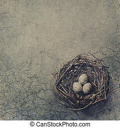 Bird Nest - Bird nest with eggs on dry desert grond