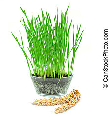 wheat grass and wheat ears isolated on white