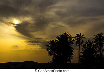 an oasis in the Atlas Mountains - an oasis of palm trees and...