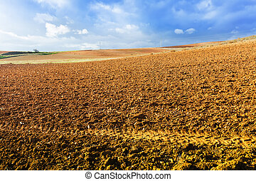 idle field in Europe at sunny  day