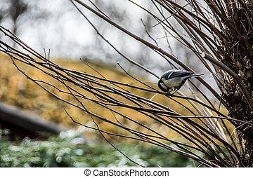 Peu, oiseau, séance, dans, arbre, photographies