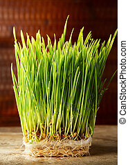 Wheat Grass - Fresh, young wheat grass