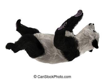 Panda Bear - 3D digital render of a cute panda bear isolated...