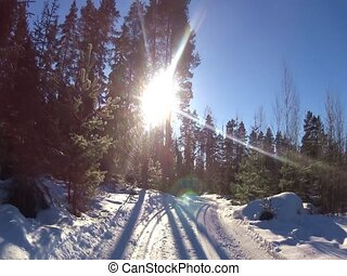 Cross country ski track in forest - Moving along Nordic ski...