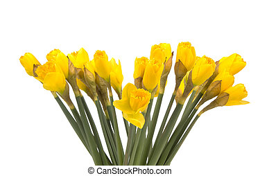 bunch of daffodils isolated on white background