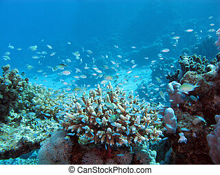 coral reef on tke seabed at great depth on a background of...