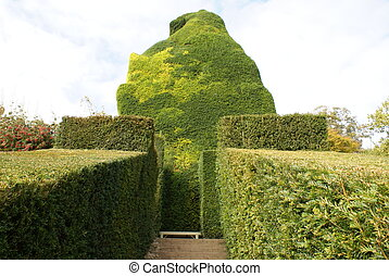 yew topiary - bench, hedges, and topiary tree