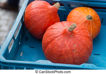 Orange Pumpkins - Orange pumpkins at the market