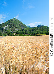 Agriculture landscape in South of France