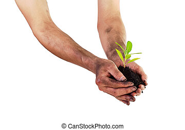 Hands holding green small plant (Business growth and new...