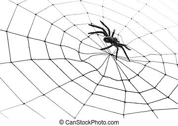 spin, web