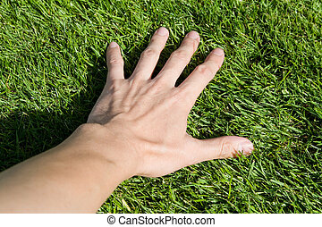 Green Grass - hand touching Green Grass close up